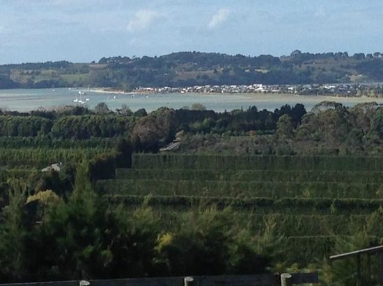 Boutique Wine Tours -  Tours: View from OBV