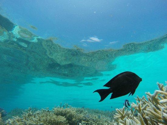 Four Seasons Resort Maldives at Kuda Huraa: Under the sea