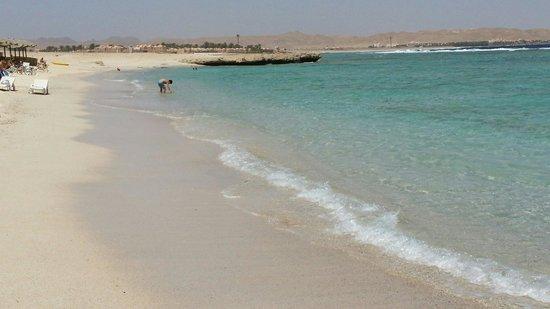 Radisson Blu Resort, El Quseir: Mare trasparente e pieno di pesci anche a riva