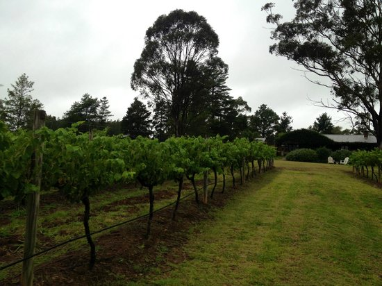 Carriages Boutique Hotel & Vineyard: walking through the vines!