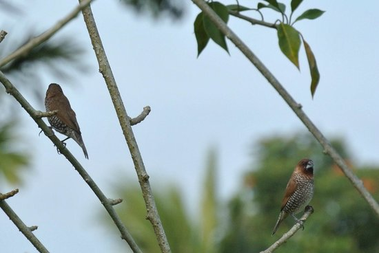 Gardenia Country Inn: The funny little birds in the botanical garden of Gardenia