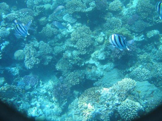 Sea Sun Hotel Dahab: риф
