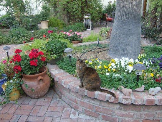 El Presidio Inn Bed and Breakfast : Die Katze im Schatten eines Baumes