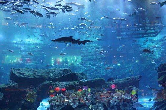 Indoor Aquarium At Dubai Mall Picture Of The Dubai Mall