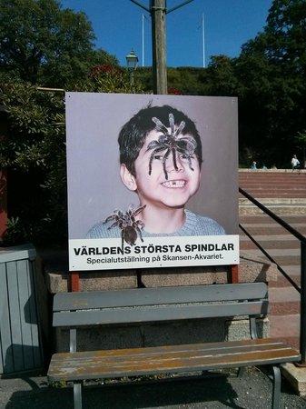 Musée de plein air de Skansen : ...qui ti passa la aracnofobia...
