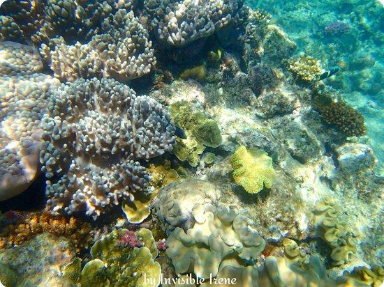 Sunlover Reef Cruises: Moore Reef