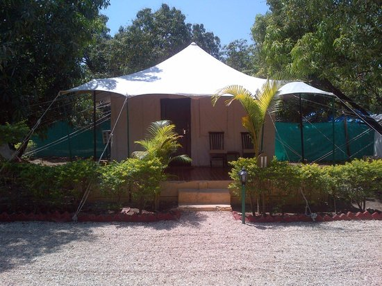 Lion Safari Camp: The Tent