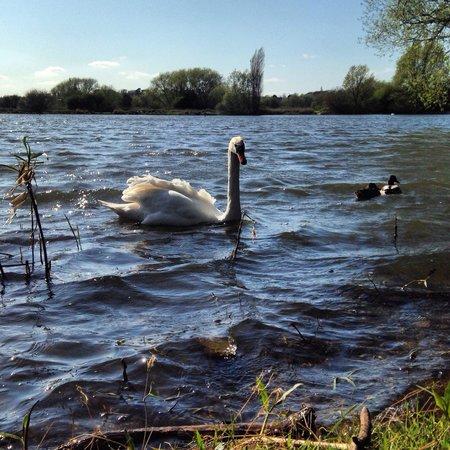 Watermead Park : Lake