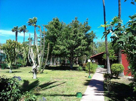 Bungalows Artemisa : Gartenanlage-Poolbereich