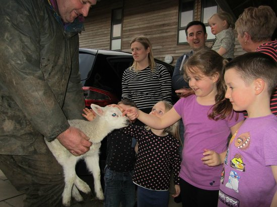 Crosswoodhill Farm Holiday Cottages Near Edinburgh: Lamb Time