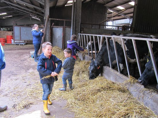 Crosswoodhill Farm Holiday Cottages Near Edinburgh: Visit to the farm