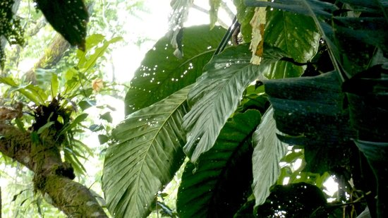 Playa Nicuesa Rainforest Lodge : lodge area