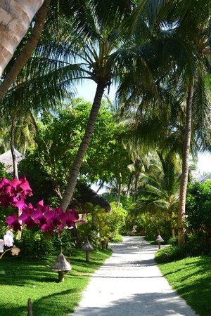 Veligandu Island Resort & Spa: The Paths are superbly maintained!