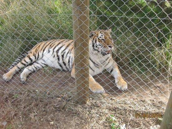 Jukani Wildlife Sanctuary: Chilling !1