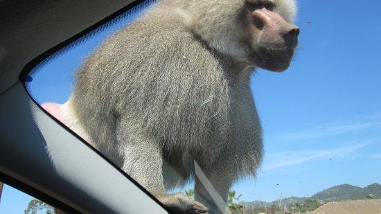 Safari Zoo: Zoo Mallorca
