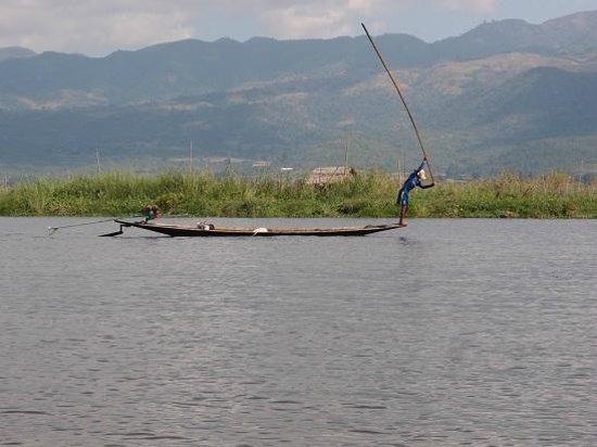 Inle Lake: Inle fisherman