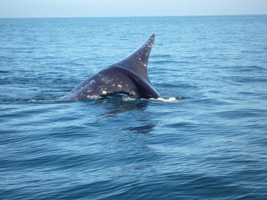Hotel Brennan: Queue de baleine grise