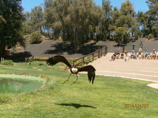 Rancho Texas Lanzarote Park: birds of prey show