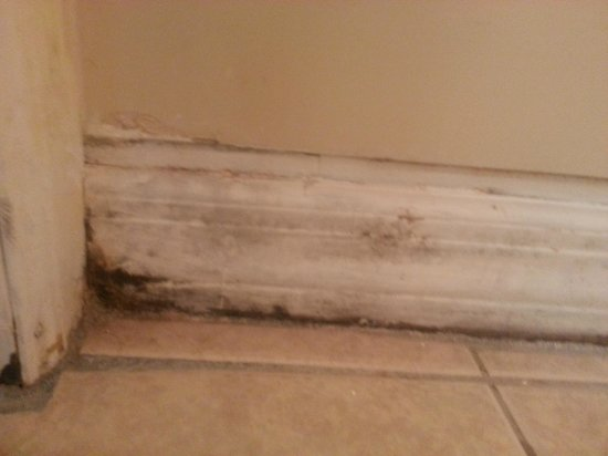 Yellowtail Inn: moldy baseboard