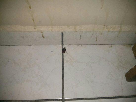 Hotel Catracho: Infestado de cucarachas, el servicio no daba vuelta y sucio en general.
