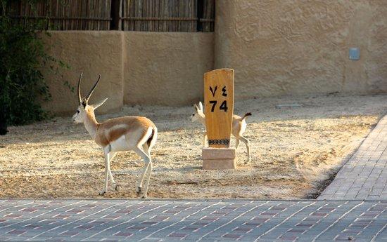 Anantara Sir Bani Yas Island Al Sahel Villa Resort: Outside the villa