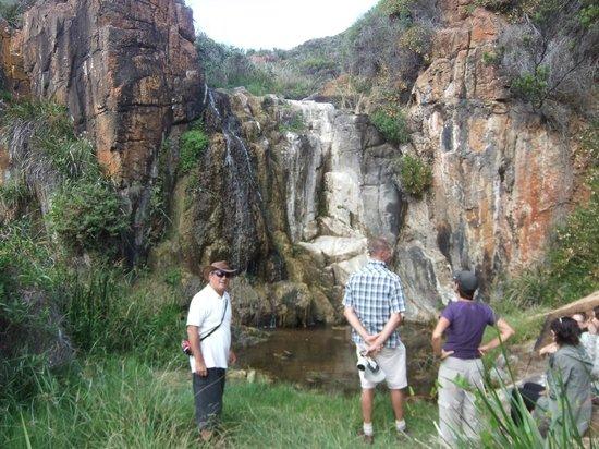 Cape to Cape Explorer Tours: View along the walk