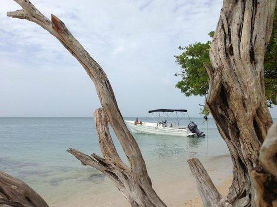 Salty Tours Tobago: Mar y Sol - our boat