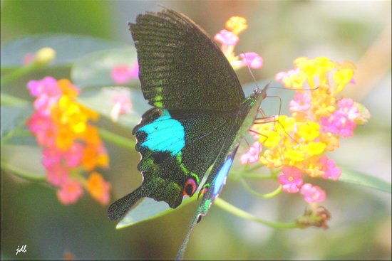 Kuang Si Falls Butterfly Park : gem of the park
