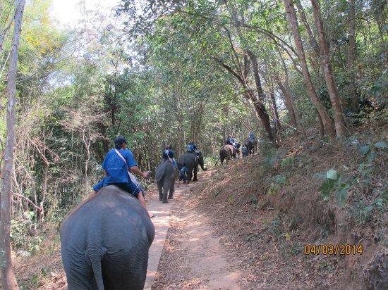 Thai Elephant Home: Jungle trek