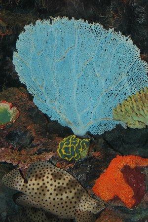 Phuket Aquarium: Коралл