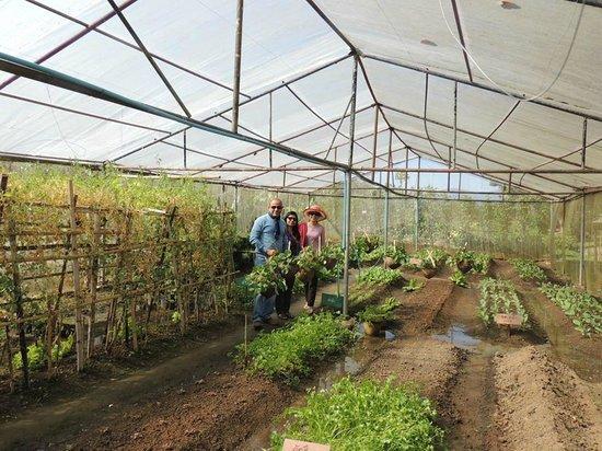 Dusit Island Resort Chiang Rai: Organic garden