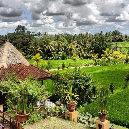 Wapa di Ume Resort and Spa: Rice field view from the restaurant