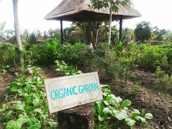 Wapa di Ume Resort and Spa: Organic Garden