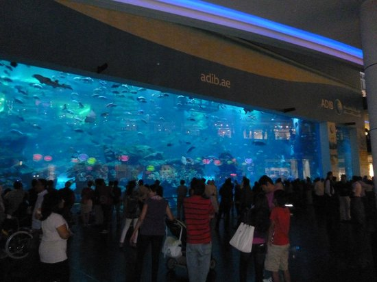 Dubai Aquarium & Underwater Zoo: Vue d'ensemble