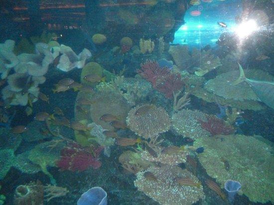 ... - Picture of Dubai Aquarium & Underwater Zoo, Dubai - TripAdvisor