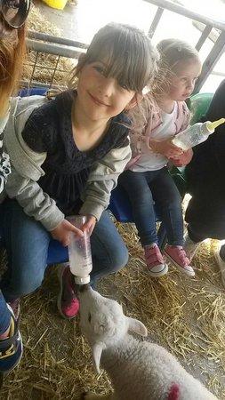 Pets' Corner: Feeding the lambs