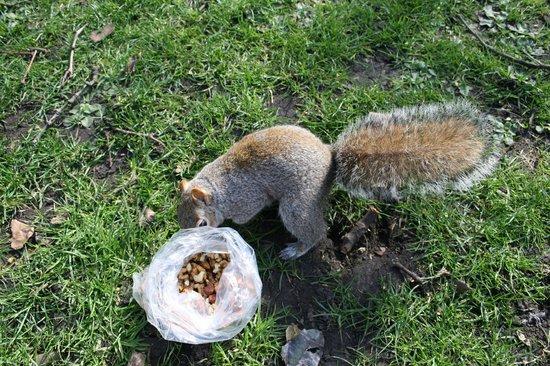 Parque de St. James: squirrel