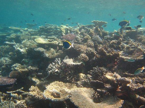 Velassaru Maldives: Снорклинг