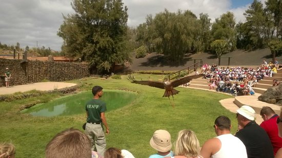 Rancho Texas Lanzarote Park : Birds of Prey Show
