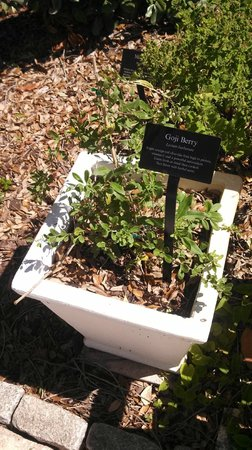 Mounts Botanical Garden: Goji Berry Plant
