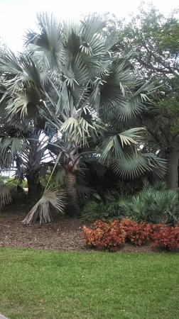 Mounts Botanical Garden: Palm Tree