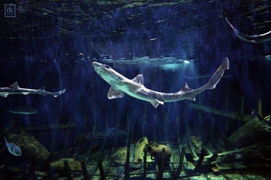 Vranjic, Croazia: aquarium