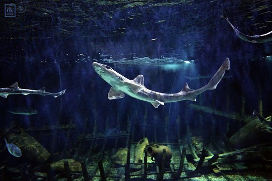 Aquarium Split (Vranjic, Croatia)  Top Tips Before You Go   TripAdvisor