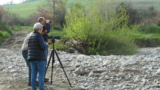 Walking in Etruria : Bird watching with Marco