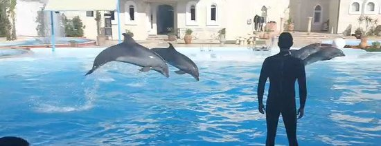Time Safari : Dolphin Show