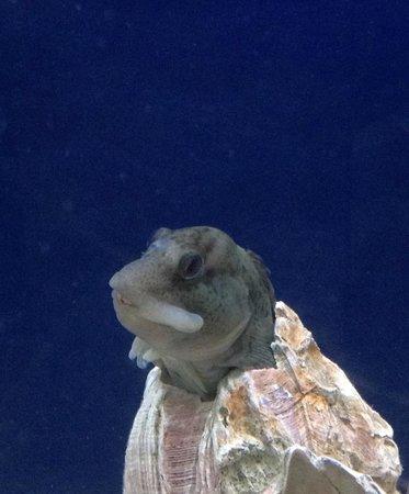 Lyme Regis Marine Aquarium : I am a fish and I live in a hole!