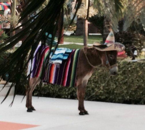 Secrets Silversands Riviera Cancun: Fiesta Night