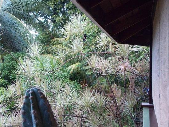 Lotus Chi Garden