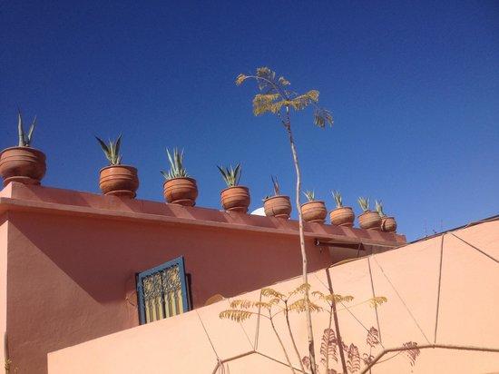 Riad Kalinka Lotus : The rood terracw