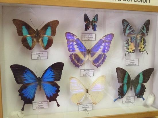 Butterfly Arc e Butterfly House and Fairies' Forest: my favorite ones